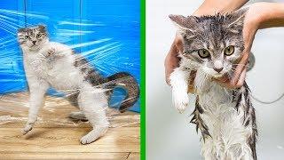 14 Consigli per gli Amanti dei Gatti!
