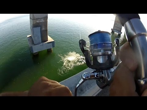 How To Fish For Tarpon From Bridges!