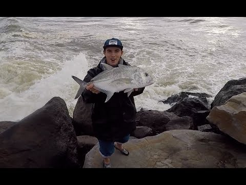 Rock wall fishing chasing Jewfish! (Part 1)