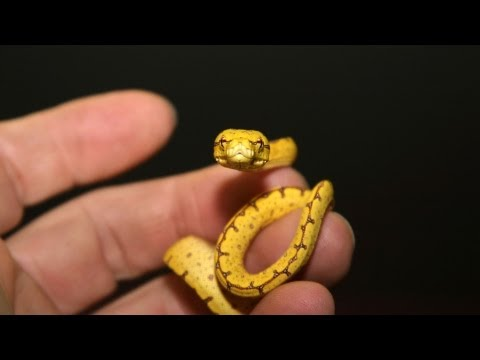 How to Feed a Baby Snake | Pet Snakes