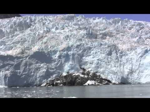 Kenai Fjords Tours, Alaska's # 1 Wildlife and Glacier Cruise