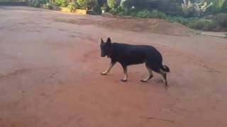 Wiggle by Dogs