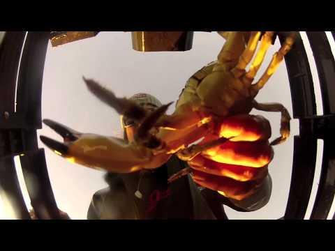 Stone Crabbing with Zane Osborn