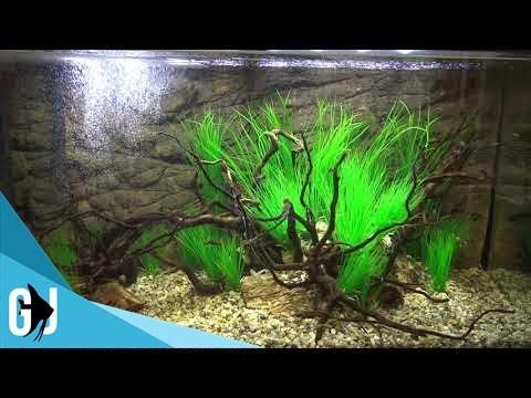 Aquarium Fish Tank Screensaver HD 1920x1080 30 Minute Loop