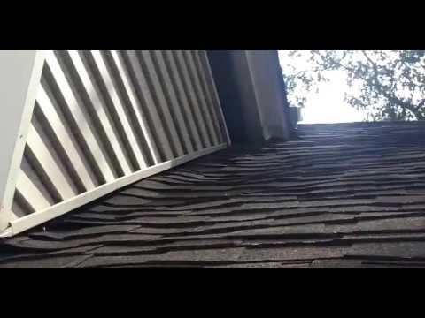 Squirrel and Mice in Walls Metuchen NJ 732-284-3807