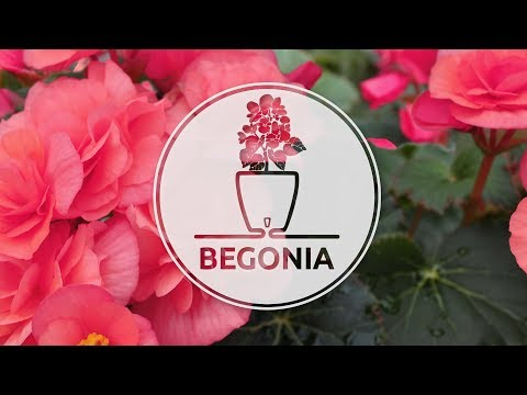 How to plant Begonia in a self watering DECO' Twin pot by Santino