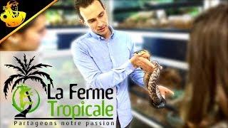 La Ferme Tropicale Magasin Reptiles