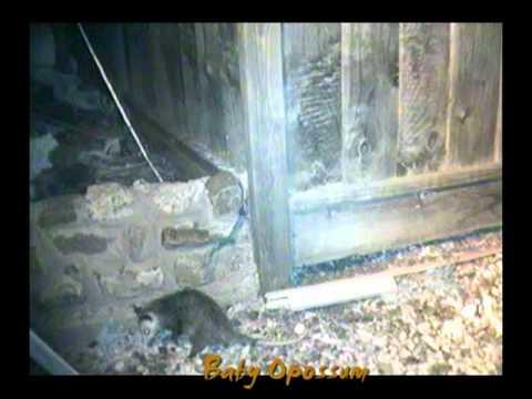 Night life around the house (wild animals) [Backyard night wild life Project]