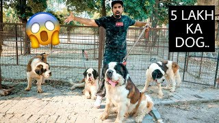 India's Largest Dog Collection (dog Breeding, sell puppies)
