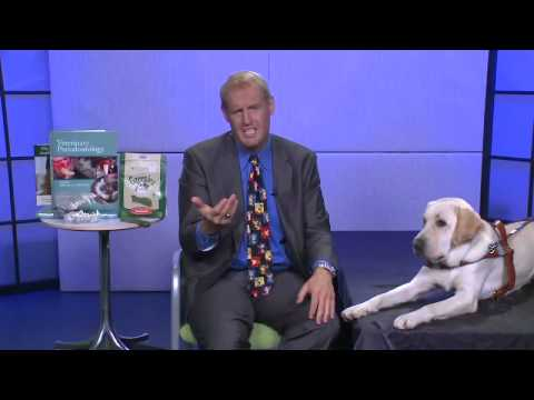 How to Prevent Gum Disease in Pets with Dr. Brook Niemiec and Tom the Service Dog