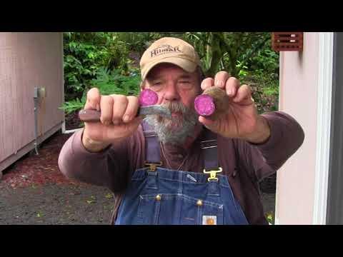 Garden & Lava Report 6-5-18