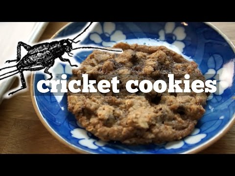 Cricket Chocolate Chip Oatmeal Cookies - You Made What?! - bug recipe