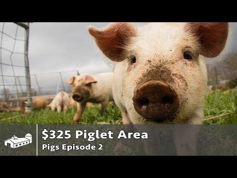 $325 Pig Pen for Grass-Fed Pork