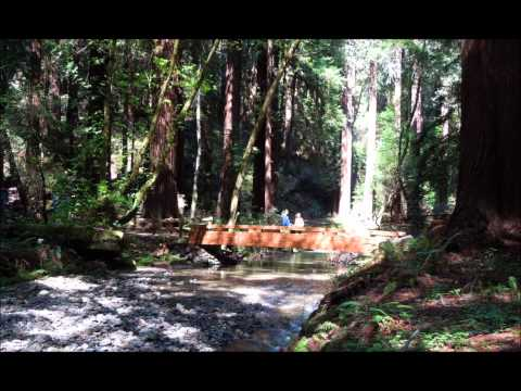 Muir Woods National Park  Tour Video from San Francisco