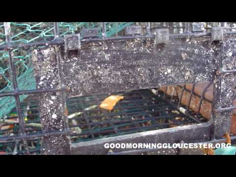 How A lobster Trap Catches Lobsters
