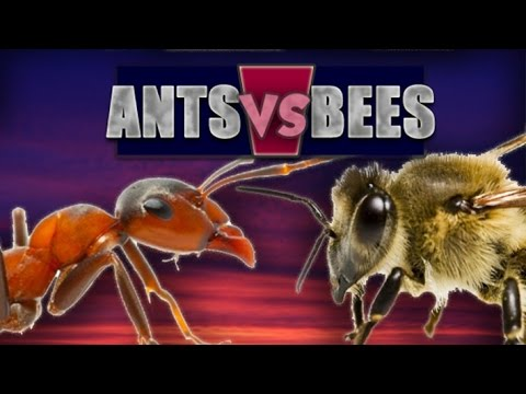 How to Get Rid of Ants in the Hive!