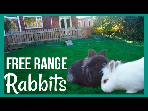 Free Range Rabbits!