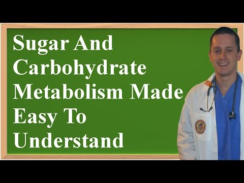 Sugar and Carbohydrate Metabolism: How it Works (Easy to Understand!)