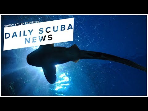Daily Scuba News - DNA From Sea Water Helps Find A Rare Shark