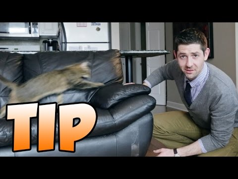 TIP for How to Stop Your Cat From Scratching the Furniture