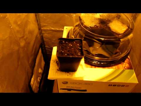 Bean Plant Growing Competition - Real Sunlight V.S Artificial Sunlight