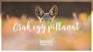 Varázslatos Magyarország – Csak egy pillanat (Lábas Viki, Trokán Nóra, Puskás Peti, Buzás Bence)