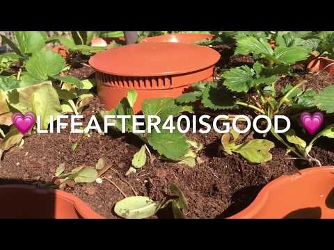 4 Easy Ways to Compost SAFELY!