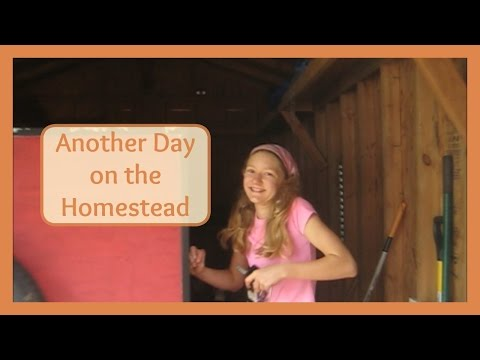 Another Day on the Homestead - Futon & Garden