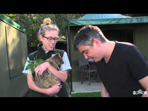 How to make a Raw Salad with Quokkas from Taronga Zoo - Sydney Harbour Kitchen