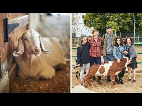 VLOG: Visiting an Animal Sanctuary! 🐮(Freedom Farm)