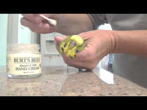 #9 Keeping and handling: treating beak mites