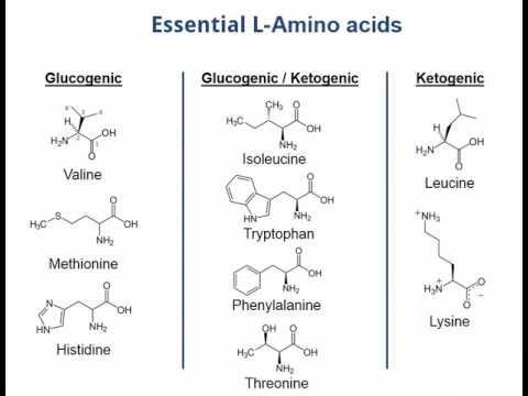 Essential amino acids mnemonic song - very short