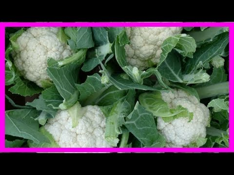 Don't throw out those cauliflower leaves, they're healthy and delicious