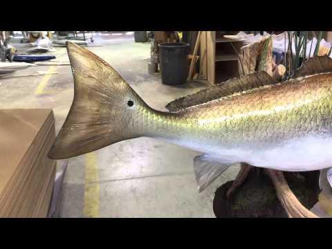 Redfish on Muddball   Gray Taxidermy Fishmounts, Custom fish reproductions
