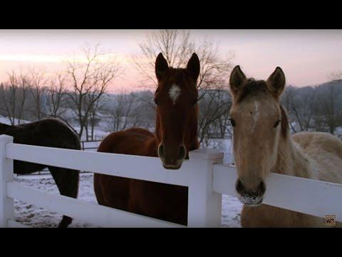 Barn & Buddy Sour Horses