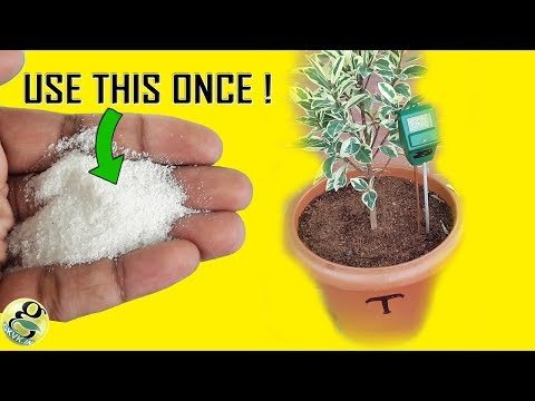 USE THIS HACK TO WATER YOUR PLANTS ONCE A WEEK | SAP EXPERIMENT