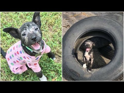 Puppy living in danger area without any safe gentlewoman gave her better life