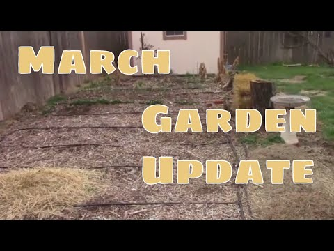March Garden Update and Tour - Outdoors, Plus Seedlings and Grafts.