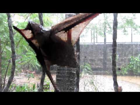 Endangered Fruit Bats and Typhoon Nesat in Cabanatuan City, Philippines