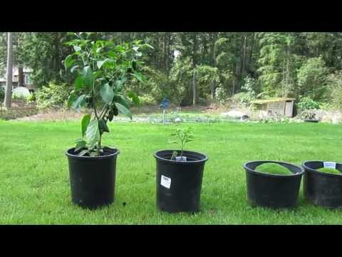 Does miracle grow work - Miracle gro all purpose garden soil ...
