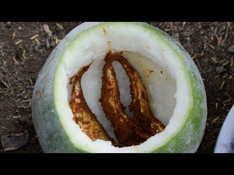 Traditional way making fish fry inside Pumpkin | Yummy fish fry | Cooking fish inside Pumpkin