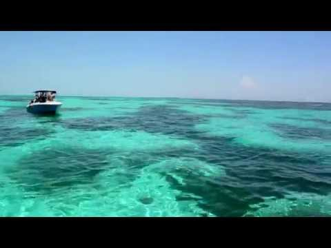 Swimming with Whalesharks Excursion at the Riviera Maya