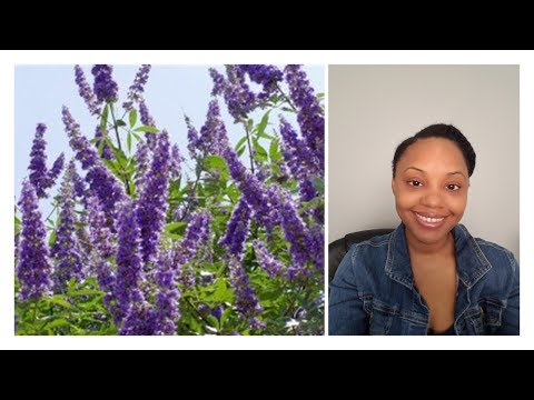 Vitex/Chasteberry update | it works with caution