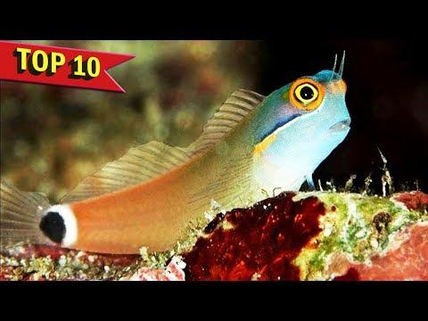 Top 10 Peaceful Freshwater and Marine Aquarium Fish
