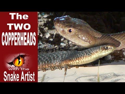 Snake Artist E04 - The 2 Copperheads