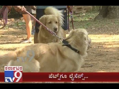 `Pets License`: Large Number Of Dogs Seen Brought To Camp For Registration In Bengaluru