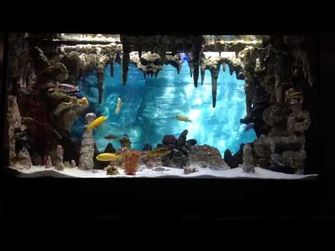 DIY Underwater Cavern Aquarium with 3D background