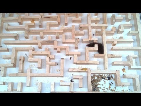 Bigger, tighter mouse maze experiments