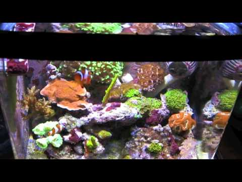 BioCube 8 Reef Tank with LED upgrades, as well as a Fuge, Protein skimmer, Auto top Off