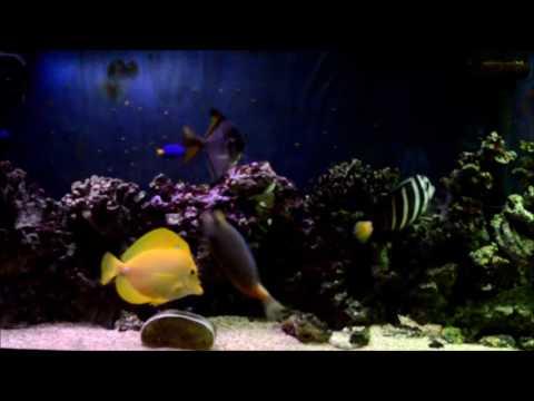 Play Of Life (Fish Aquarium)